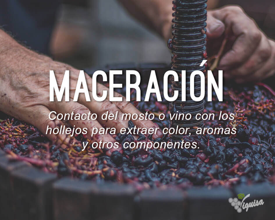 maceracion que es diccionario del vino